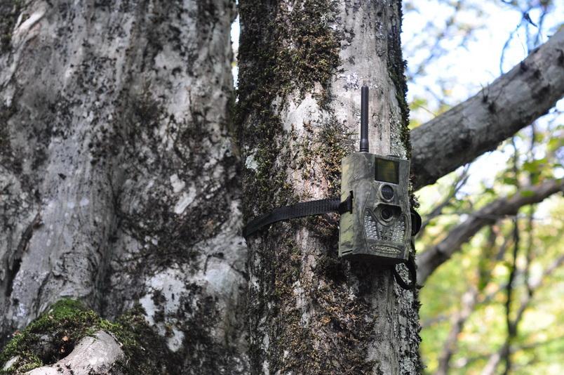 Лесная фотокамера Scoutguard SG550M